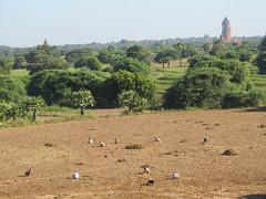 "Bagan: la pagode Pyathada Paya <a style=""margin-left:10px; font-size:0.8em;"" href=""http://www.flickr.com/photos/127723101@N04/23096404570/"" target=""_blank"">@flickr</a>"