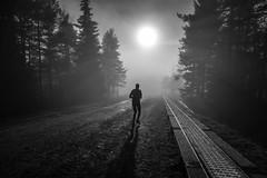 (Svein Skjåk Nordrum) Tags: light shadow blackandwhite bw sun mist motion silhouette oslo misty landscape movement woods noir running line explore nero sunbeam sunray explored