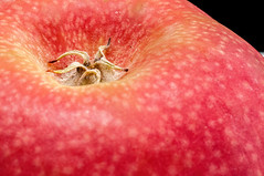 Apple's calyx - closeup view (Victor Wong (sfe-co2)) Tags: apple background blushing botany calyx closeup cultivated delicate detail edible fertility food fresh fruit growth healthy highresolution juicy macro nature nutritious red science season vitamin