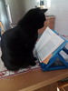 Clever Kat by QFS_mlp (QueenFaeeStudio) Tags: ngm catseyes cat blackcats books magic cats felini gatti mici katze gatos blackcat
