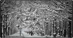 Winter in Bucharest (Ioan BACIVAROV Photography) Tags: white snow neige zapada amazing minunat landscape snowstorm road romania people hiver hard hardwinter iarna iarnagrea fog photojournalism bacivarov ioanbacivarov bacivarovphotostream interesting beautiful wonderful wonderfulphoto nikon