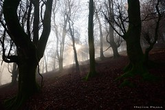 Lights in the forest (Hector Prada) Tags: bosque invierno niebla luz perdido embrujado mistico atmosfera naturaleza mañana hayedo forest winter fog mist mystic magic haunted charmed natural texture exposure nikon contrast life fantastic efimero momento moment d610 hector prada