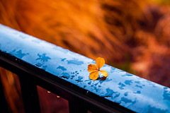 hope (rushorahman) Tags: christmas happynewyear fall 2016 patio fujiflm bokeh hope anticipation fuji1855mmois december love yellow winter rainy