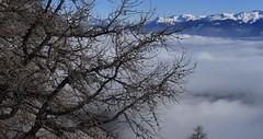 Ovronnaz (bulbocode909) Tags: valais suisse ovronnaz arbres branches mélèzes montagnes nature hiver neige brouillard stratus bleu
