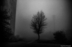 (Giorgos-S) Tags: mist parnitha fuji x100 blackandwhite