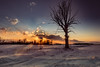 sunset sentinel (Christian Collins) Tags: tree winter cold midmichigan michigan field campesina campo invierno nube cloud atardecer canoneos5dmarkiv barren drift snow puestadelsol sunset frigid coldlooking bare