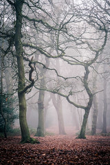 Crooked (Dave Fieldhouse Photography) Tags: suttonpark birmingham park trees mistytreeshots mist westmidlands nature winter morning clag damp murk fuji fujixt2 fujifilm