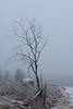 20161217-08106 (tommymasa) Tags: variotessartfe42470 kirkkonummi nature e winter