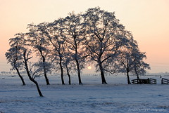 Sunset in the Winter (Johan Konz) Tags: winter sunset orange sky rural trees outdoor landscape field serene atmosphere nikon d80 purmerend waterland netherlands tree sun fence snow silhouette