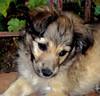 Cachorrita. (jagar41_ Juan Antonio) Tags: argentina animales animal perros perro cachorros cachorro