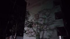 the night walker (troutfactory) Tags: night tree shadow handheld availablelight 大阪府 osaka 関西 kansai 日本 japan asuszenfone3 phonephotography cameraphone