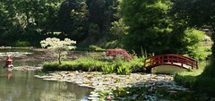 Bennets Water Gardens (janroles) Tags: landscape flickr canoneos400d nature water waterlilies bridge trees lake bennetswatergardens dorset lily plants serene england light