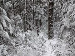 Whiteness (mag3737) Tags: snow woods forest fromme mtfromme