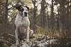 02/52 Edgar (Jutta Bauer) Tags: bokeh 52weeksfordogs 52weeksforedgar 252 edgar excellentedgar wintermorgen winter morning morninglight dog boxermix pitbullmix