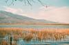 09540023 (tarteltarantel) Tags: nature tree mountain green blue lake tent camp sky cloud analoguephotography analogue analog fotoğraf türkiye kocaeli izmit dağ doğa