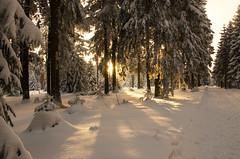 Winterwunderwald (Deutscher Wetterdienst (DWD)) Tags: winter winterlandschaft winterlandscape winterwald winterforest winterwunderwald winterwonderland schnee snow kälte could wetterdienst dwd