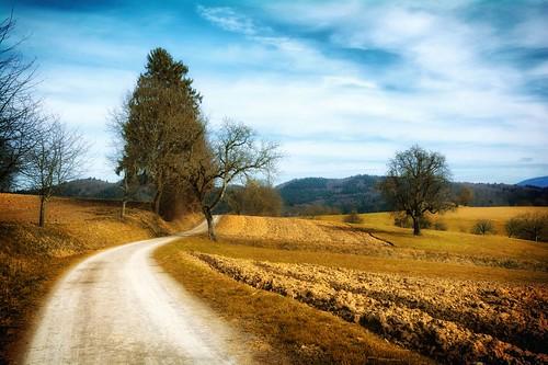 Windenreute Landscape