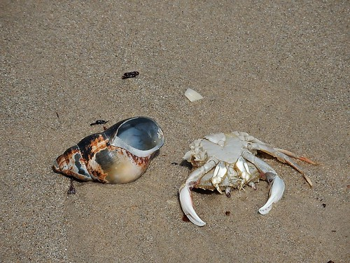 Shell and Dead Crab