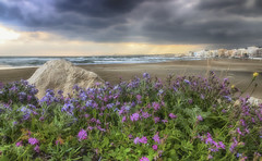 Cloudy spring morning (Theophilos) Tags: flowers spring beach clouds nature rethymno crete λουλούδια άνοιξη φύση παραλία σύννεφα ρέθυμνο κρήτη