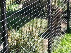 20150919_114555 (mjfmjfmjf) Tags: oregon zoo 2015 greatcatsworldpark