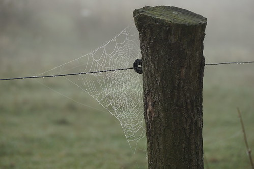 Spider web with morning dew 1