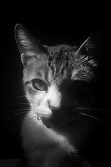 (T/D/D/S) Tags: light blackandwhite sun cute love beautiful cat wonderful dark eyes pretty day head side pussy greeneyes gato smell soul meow darkside callisto femea mawh