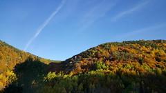 Sonbahar (autumn) (esginmurat) Tags: autumn trees sky turkey geotagged türkiye gökyüzü giresun sonbahar ağaçlar güz şebinkarahisar şeb