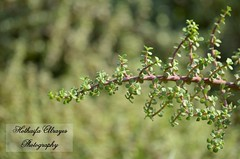 #uae #dubai #dubai_creek_park #creek_park #green #plant #plants #bokeh #photography #myphoto # # #_ #__ # # # #  # # (alrayes1977) Tags: plants plant green photography dubai bokeh uae myphoto     creekpark     dubaicreekpark