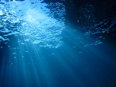 illuminating the deep (sunumet) Tags: ocean california light sea sunlight nature water ellen marine underwater pacific ripple scuba diving surface scatter socal oil rays rigs