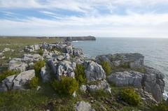 St Govan's Head and Samphire (imaginedhorizons) Tags: pembrokeshire stgovanshead carboniferouslimestone goldensamphire