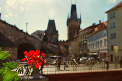 Prague (mclcbooks) Tags: flowers landscape cityscape prague praha czechrepublic charlesbridge karlvmost