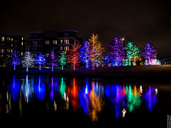 Vitruvian Lights 2015-13 (MikeyBNguyen) Tags: us texas unitedstates christmastree christmaslights christmastrees addison vitruvianpark vitruvianlights