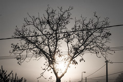 IMG_9193179 (feliceciccone95) Tags: morning light shadow sky sun tree nature sunrise dark flickr branch shadows branches pic ombre cielo sole felice luce rami mattina ciccone