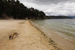 "Playa Blanca en la Laguna de Tota • <a style=""font-size:0.8em;"" href=""http://www.flickr.com/photos/78328875@N05/23711036611/"" target=""_blank"">View on Flickr</a>"