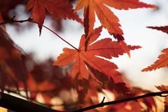 PC105663.jpg (plasticskin2001) Tags: leaf