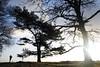 "Silhouttes (""Daniel"") Tags: silhoutte tree photographer landscape veluwe netherlands spar den ginkelseheide"