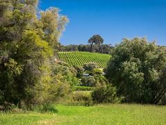 Weinberg bei Margaret River (bayernphoto) Tags: australien western australia westaustralien oz down under winery weinberg margaret river yallingup weinbau genuss trauben grape