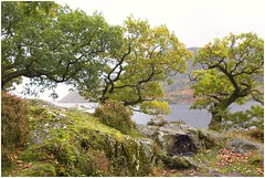 Twisted Trees (Audrey A Jackson) Tags: canon60d lakedistrict cumbria autumn nature trees leaves rocks colour moss mountains lake 1001nightsmagiccity