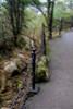 山中遊029 (kingston Tam) Tags: moss grass path hillside hiking field bigtree oddtree garden nature fujifilmxt1
