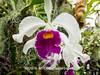 Duke Farms-7013026-2 (myobb (David Lopes)) Tags: dukefarms hillsborough nj newjersey nature olympus em1 omd