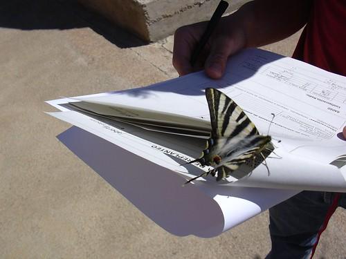 Mariposa Trabajando. Pinchar sobre la imagen para ver la fotografía original