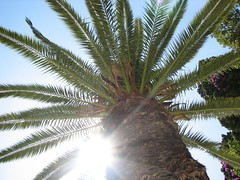 (jaja_1985) Tags: sky sun tree palm palmtree tropical