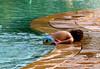BaYwaTch (-ViDa-) Tags: boy pool kid tired liltuna exploretop20