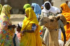 Eritrea lafforgue (Eric Lafforgue) Tags: africa market camel souk nomad eritrea nomadic eastafrica aoi eritreo erytrea lafforgue eritreia  ericlafforgue lafforguemaccom nomadiclife mytripsmypics ertra    eritre   rythre eritreja eritria africaorientaleitaliana    eritre eritrja  eritreya  erythraa erytreja
