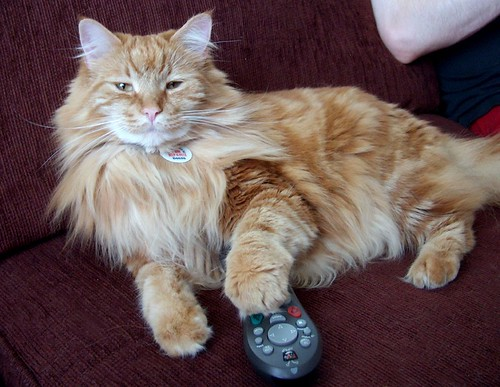 Rory loves Tivo...don't we all...