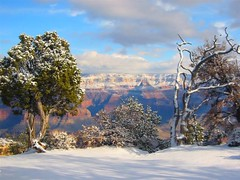 Grand Canyon in January (IrishNYC) Tags: trip travel blue trees arizona sky snow mountains southwest west water clouds america wonder blog colorado rocks natural earth bare branches grandcanyon south snowstorm grand canyon pines american americana geology rim