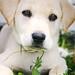 Snicker-Doodle_ Pet Sitters Wimberley Texas