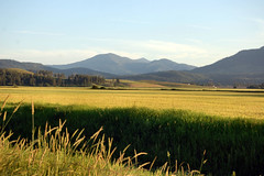 Golden Grass (lawatha) Tags: sunset field grass golden washington hills pacificnorthwest fields wa hwy395 pnw hilly grassy colville saywa