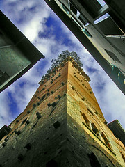 A Tree on the Top (sistereden2) Tags: street italy tower lucca tuscany torreguinigi kakadoochoice bsbangles tccomp127 lplookup