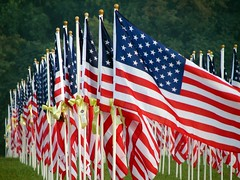 a flag for each lost Iraqi veteran